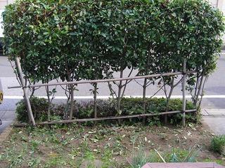 庭の手入れ 2011夏
